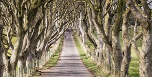 the-dark-hedges-stranocum-county-antrim