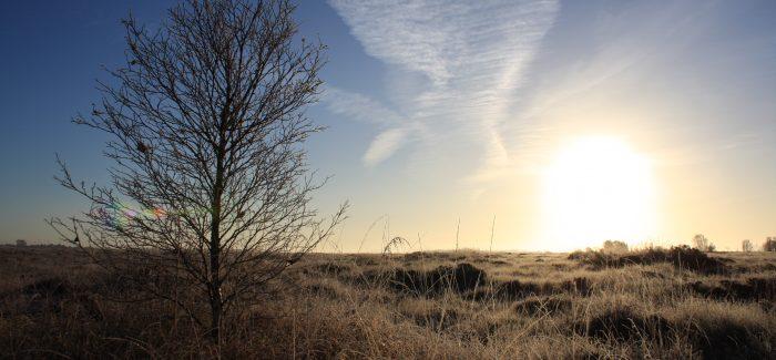 New project to restore Ireland's bogland