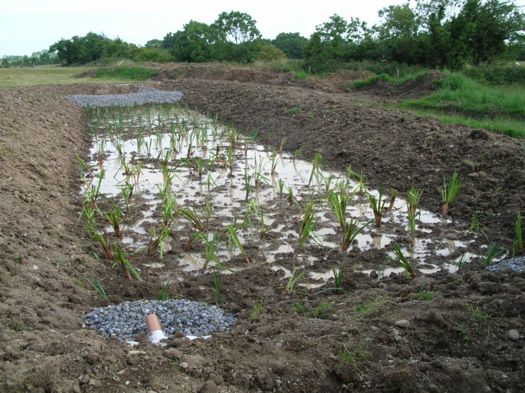 Newly planted soil based constructed wetland system